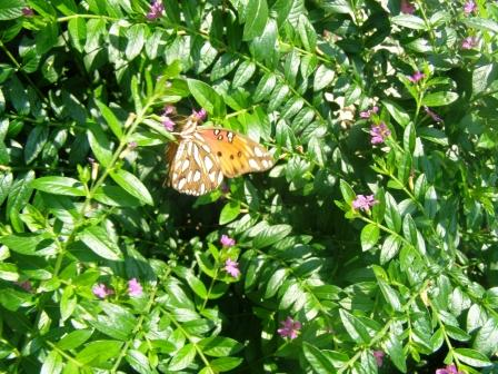 Butterfly Discovery Program for Kids Hilton Head Is.