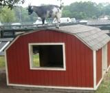 goat-at-lawton-stables