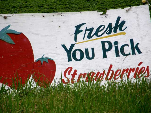 pick your own strawberries Savannah