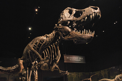 Image result for Tellus science museum fossil