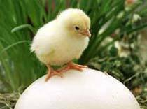 chick 2012