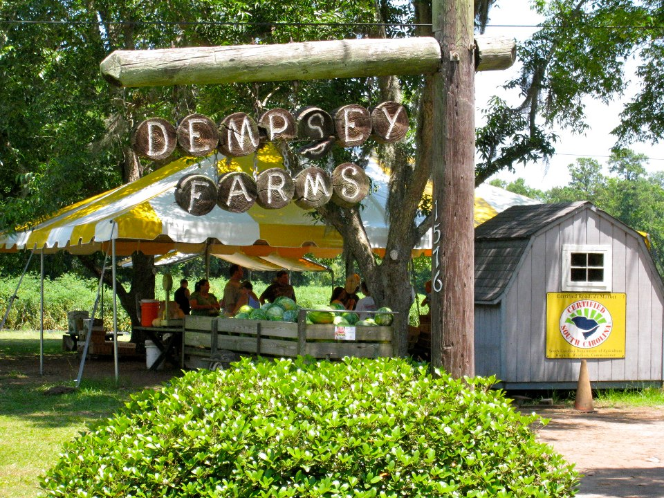 u-pick farms Savannah Dempsey Farms Beaufort S.C.