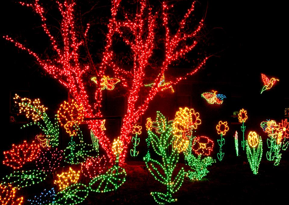 Riverbanks Zoo Holiday Lights Display 2013 Columbia S.C.