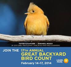 great backyard bird count Feb. 15-17 2014 savannah