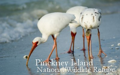 Pinckney Island National Wildlife Refuge near Savannah Hilton Head