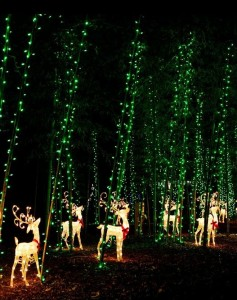 December Nights & Holiday Lights 2014 Coastal Georgia Botanical Gardens Savannah