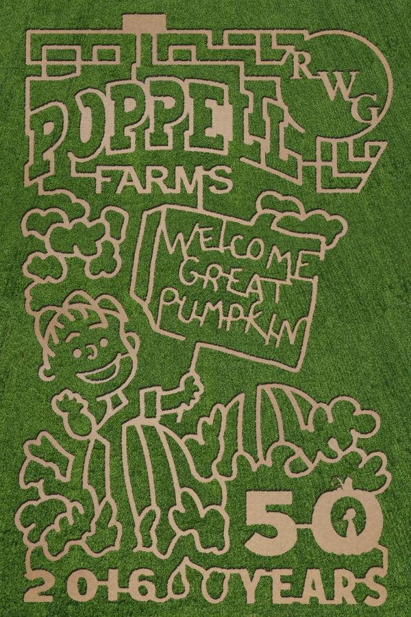 Peanuts-themed corn maze Savannah Poppell Farm