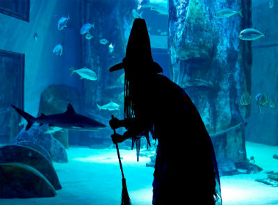 Hallowmarine Skidaway Island UGA aquarium Savannah
