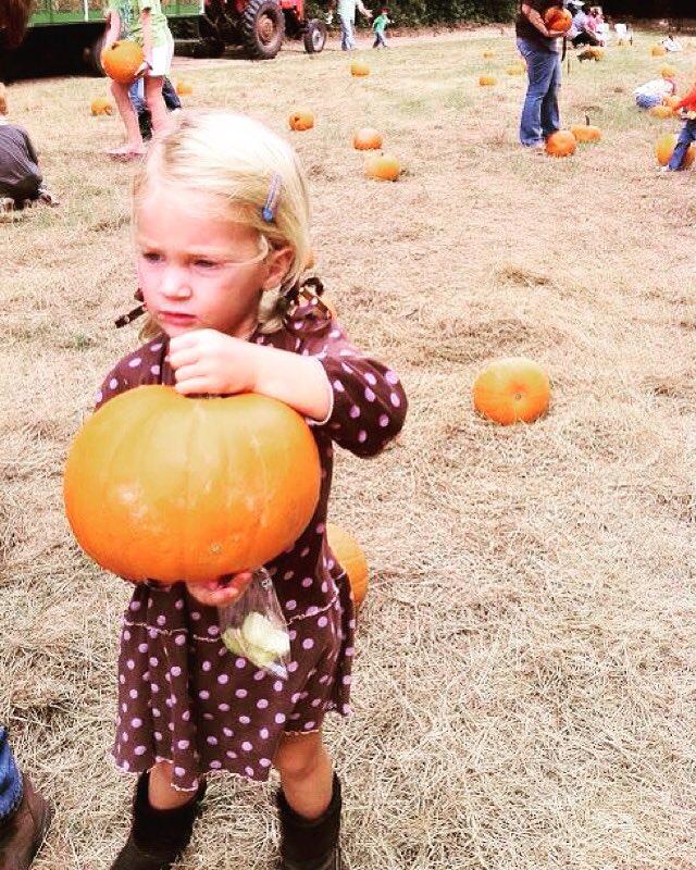Savannah pumpkin patch hayride corn maze farms