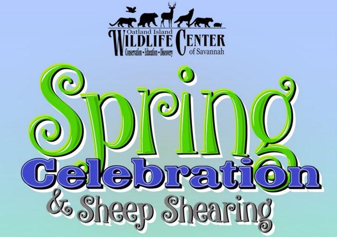 Oatland Island Sheep Shearing Festival 2017 Savannah