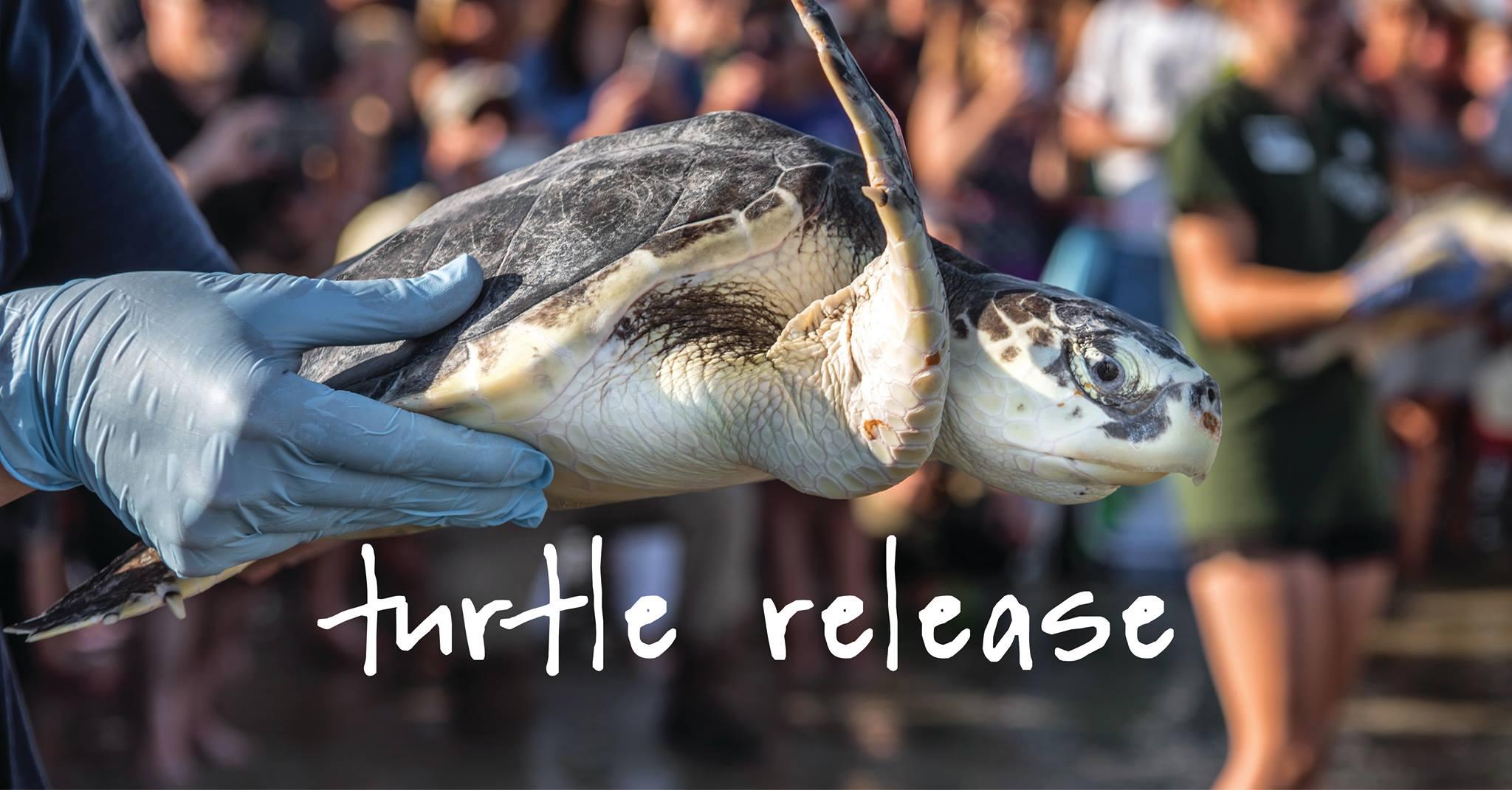 Sea Turtle Release Jekyll Island Savannah daytrips