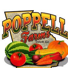 Poppell Farms pumpkin patch corn maze hayrides Savannah 2018