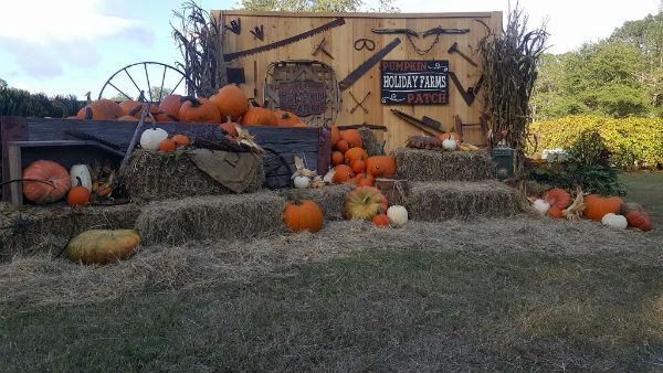 pumpkin patches farms hayrides corn maze Holiday Farms Savannah