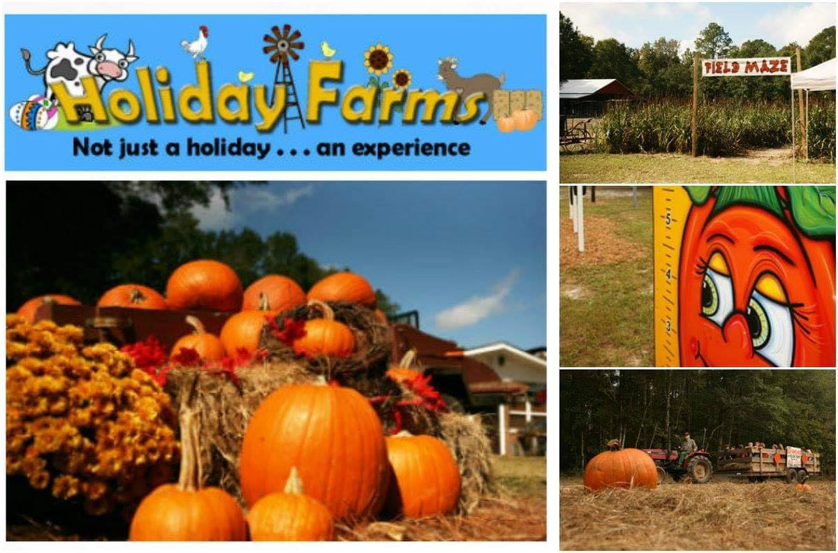 pumpkin patches savannah
