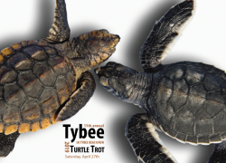 Tybee Turtle Trot 2019 5K beach run sea turtle release