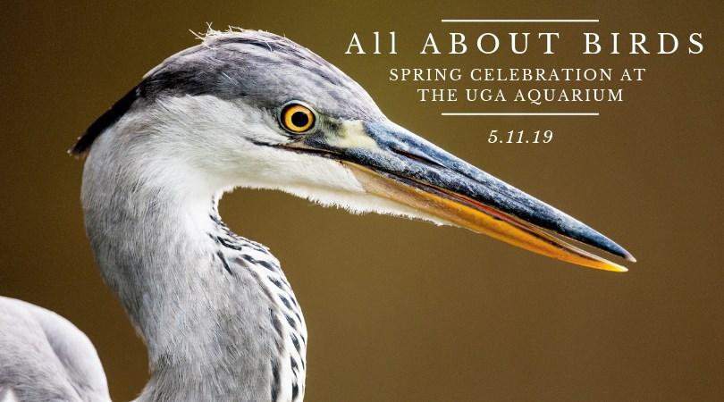 Shore Bird Festival Skidaway Savannah Aquarium