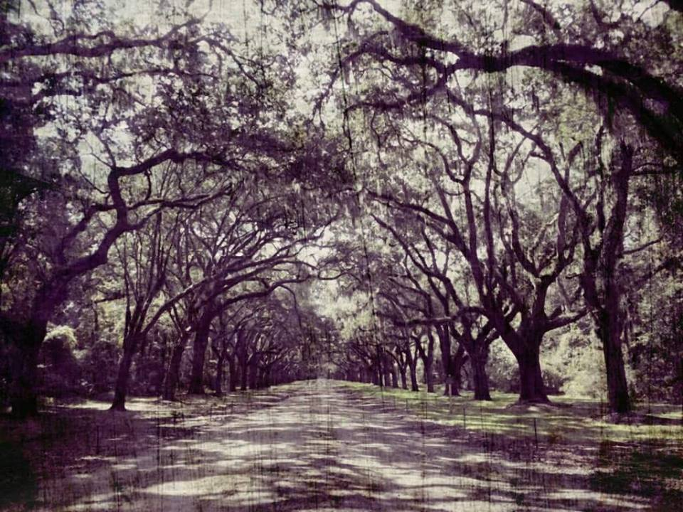 Haunted Trail @ Wormsloe State Historic Site