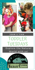 Toddler Tuesday Oatland Island wildlife center savannah