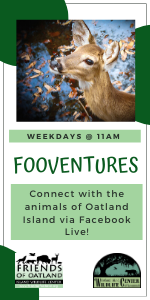 FOOVentures Oatland Island online virtual
