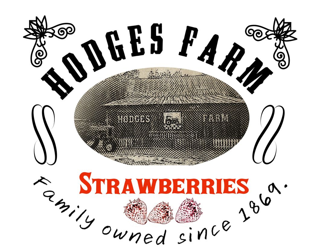 Hodges Farm Strawberries Pick Your Own