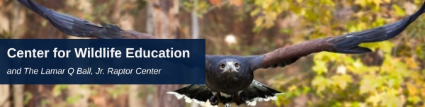 Center Wildlife education statesboro Georgia Southern Raptor Program