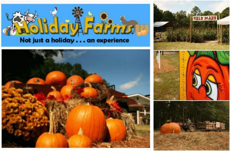 Holiday Farms Pumpkin Patch hayrides pig races ridgeland hilton head bluffton savannah