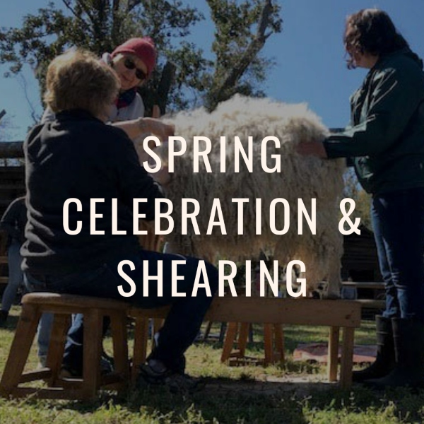 Spring Celebration Shearing 2021 Savannah Oatland Island Wildlife Center