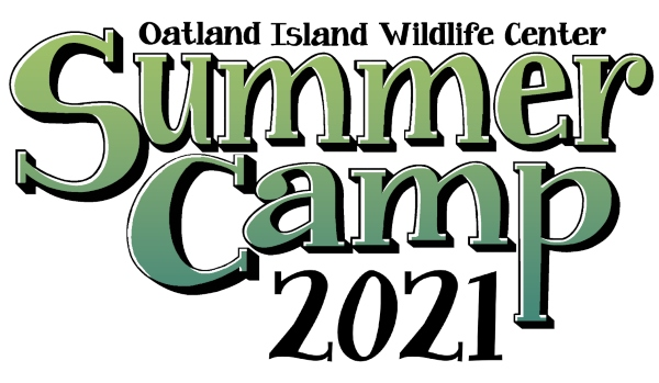 Summer Camps 2021 Savannah Oatland Island Wildlife Center