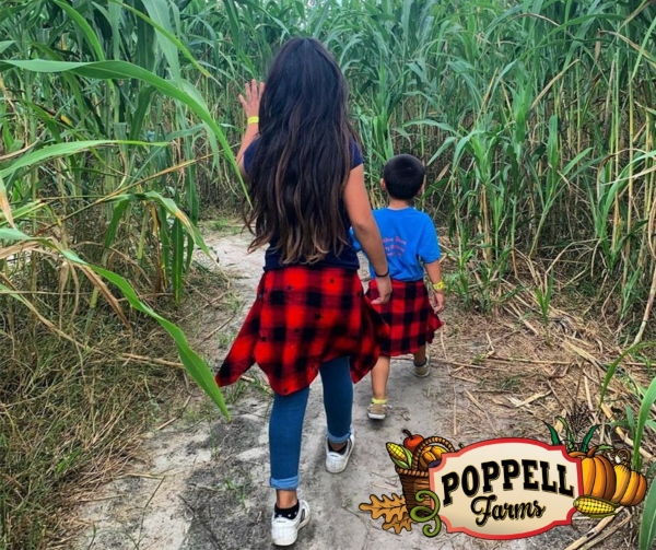 pumpkin patches Savannah Chatham County Georgia maze hayrides Poppell Farms 2021