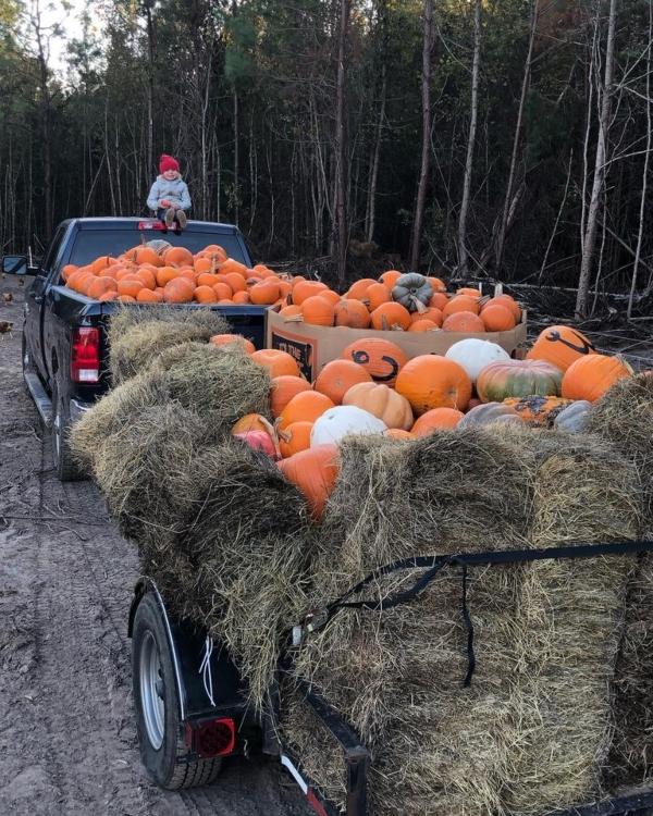 Donate Pumpkin Rescue 2021 Savannah Whippoorwill Farms SC Ridgeland