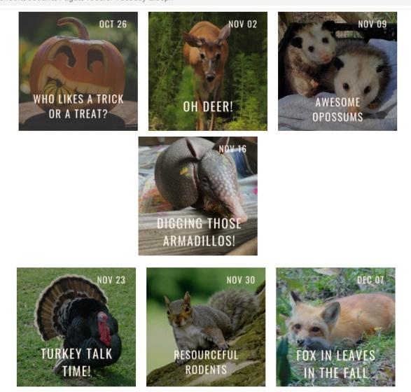 oatland island wildlife Center savannah toddler tuesdays